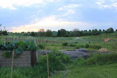 2012-075-gemuesebeet
